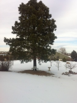 Dead tree vs. Live Tree